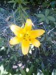 Flower, gleam and glow...