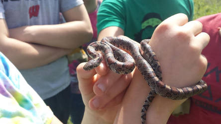My First Milk Snake by ThaddeusEx