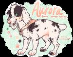 C: Aurora