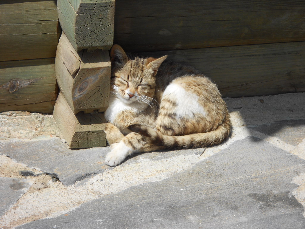 kittycat by Marachi-chan