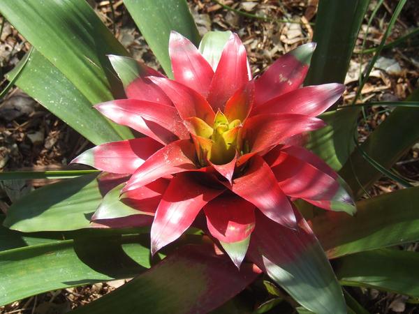 flower art thou leaves by Caliokami
