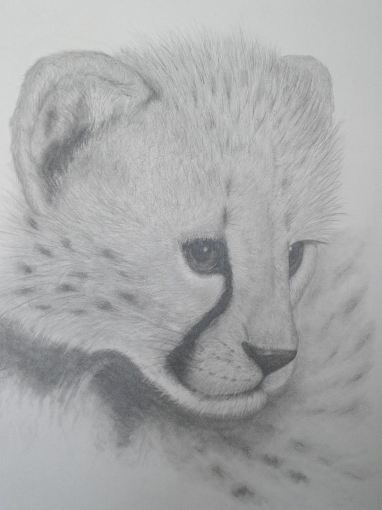 how to draw a cute cheetah step by step