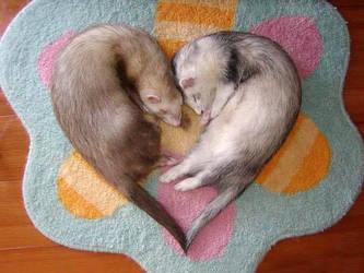 Ferrets in love by Manpride