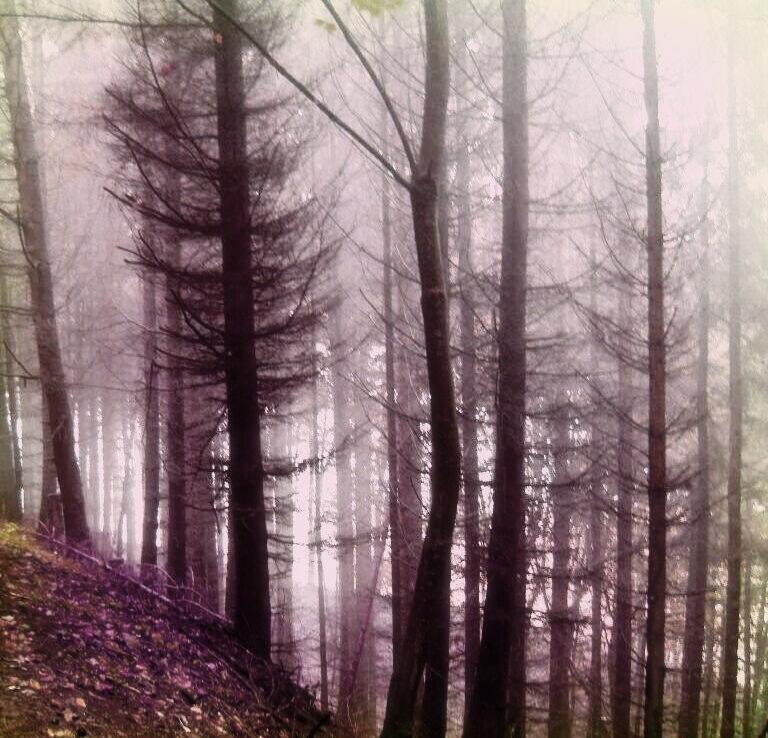 Trees 2 by untermbettheuer
