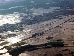 Rice fields in north Italy