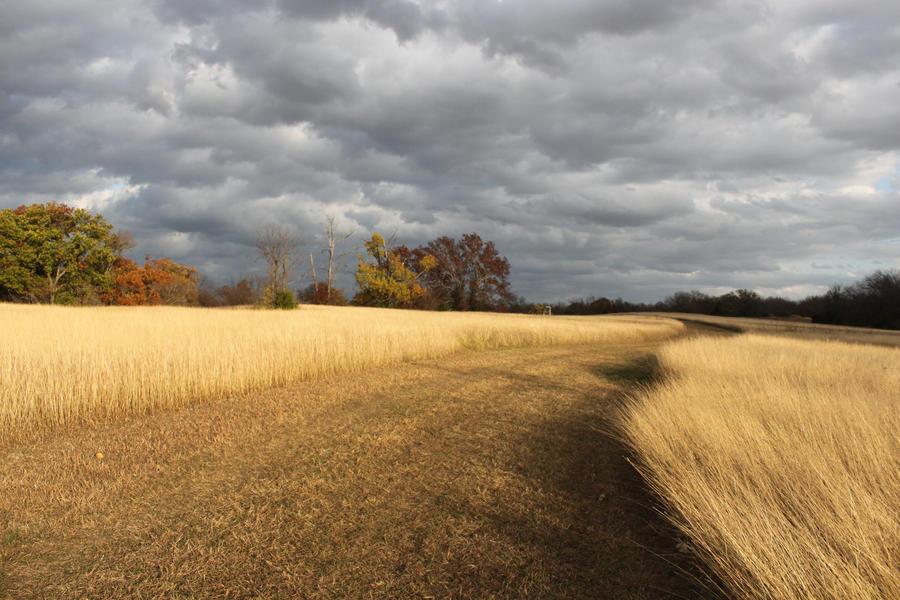 autumn road by linzeethai