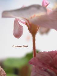 Flower Light by enimsa