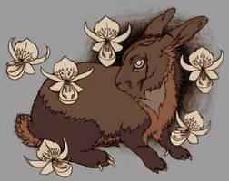 Das schwarze Kaninchen