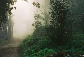 Foggy morning I by lukpazera