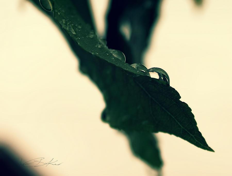 Misty ii by RosleinRot