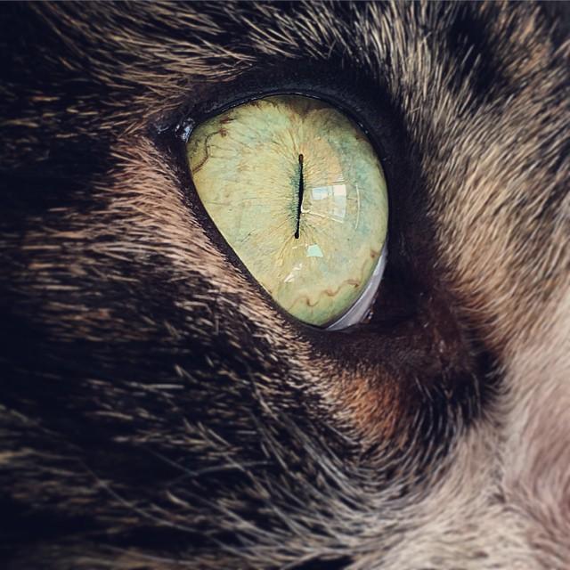 Cat's Eye by RosleinRot