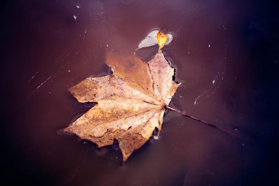 Lost in the Tide by RosleinRot