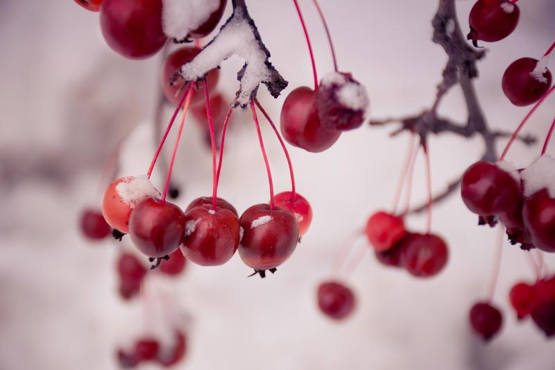 Cherries in the Snow by RosleinRot
