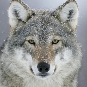LunaNyxFrost's Profile Picture