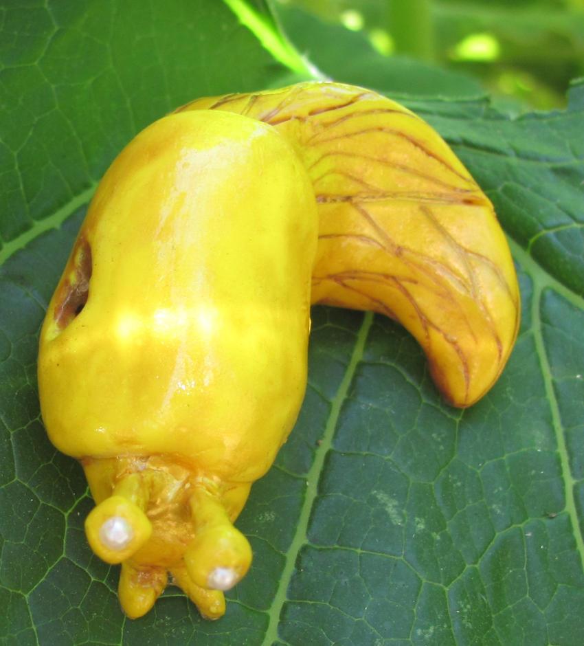 S V - Large Banana Slug by dillo