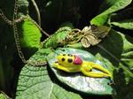 S V -Hawaiian Happyface Spider