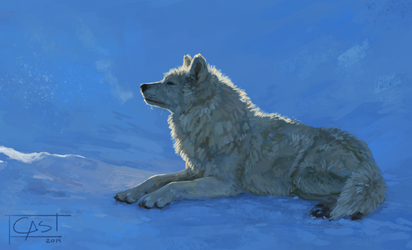 [Study] - Wolf In Morning Snow