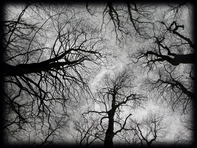 Reaching Canopy
