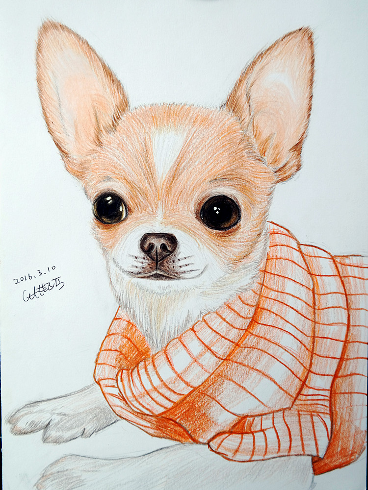 This is a photo of Invaluable Drawing Of Chihuahua