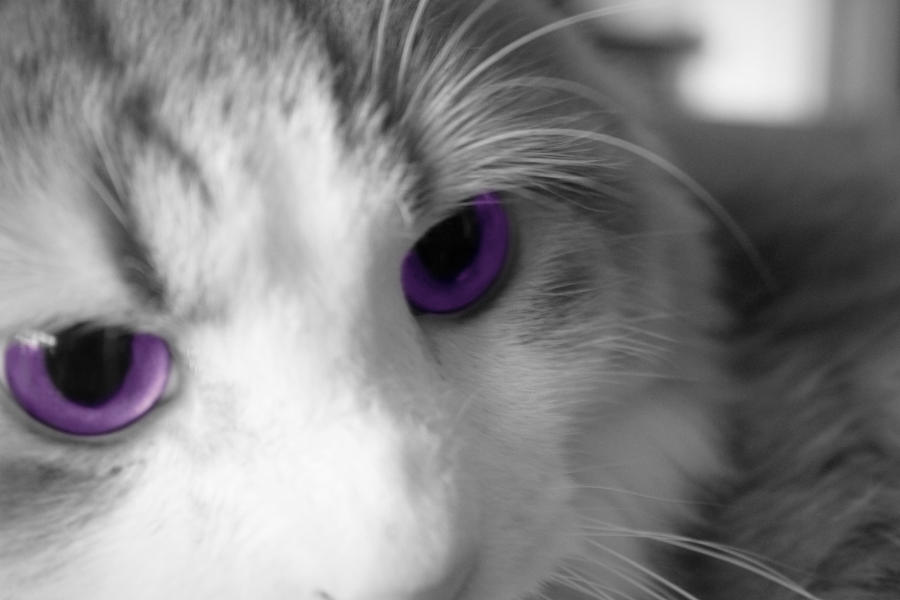 Purple Cats Eyes Beauty Black Cat Dark Face Fantasy Picture