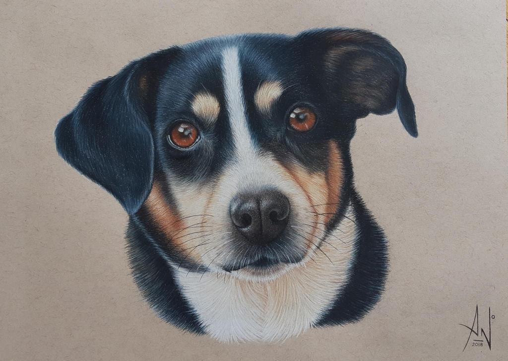 Judy - Pet Portrait