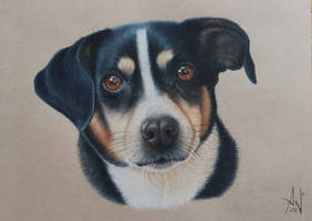Judy - Pet Portrait by A--Nonyme