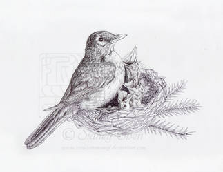 Motherbird by Teru-teruMomiji