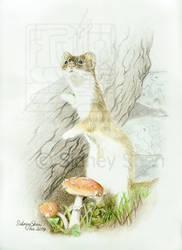 In the Woods by Teru-teruMomiji