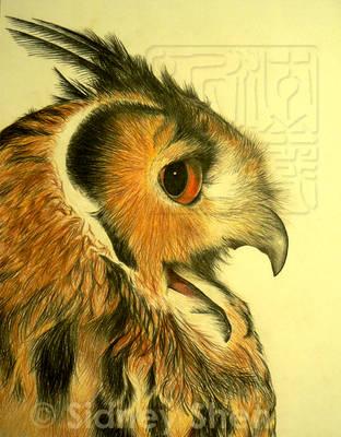 Indian Eagle Owl by Teru-teruMomiji