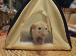 Monchichi's tent