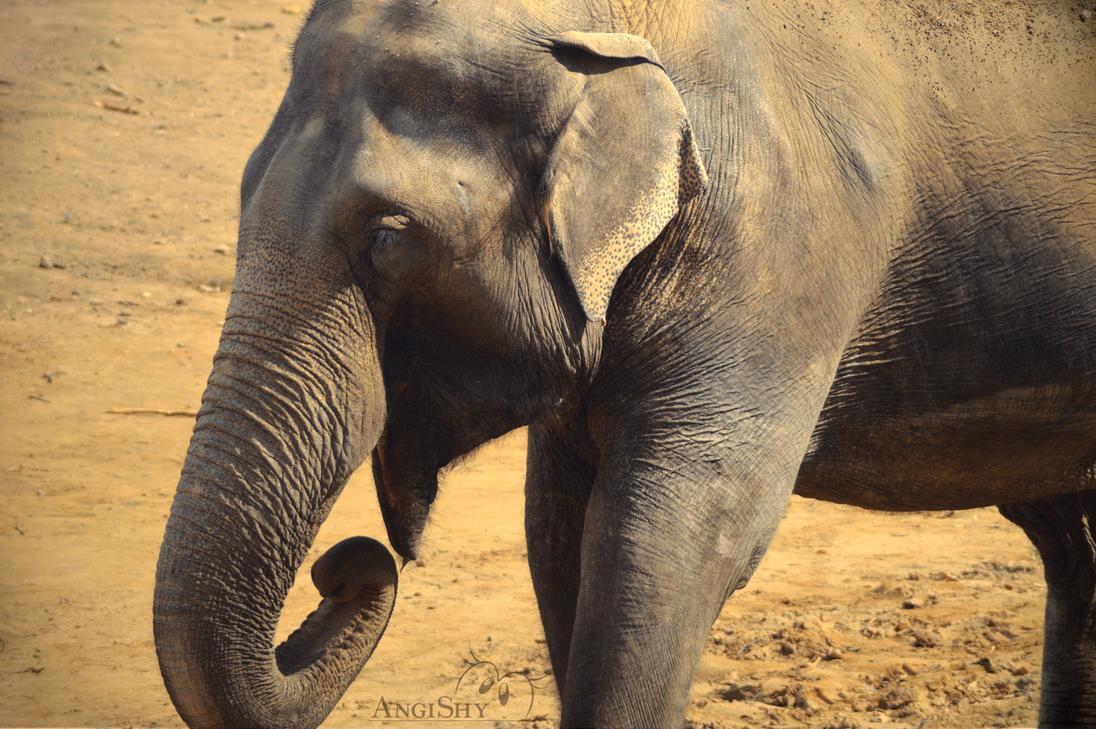 Elephant by angi shy on deviantart for Designhotel elephant prague 1 czech republic