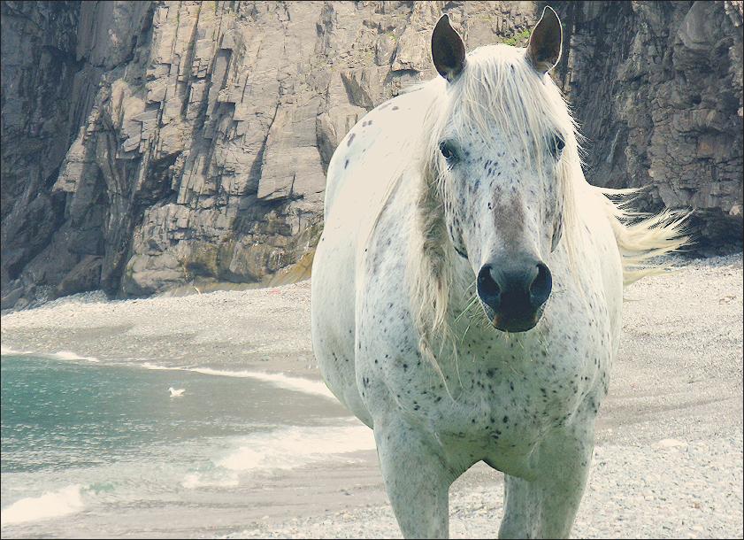 ^ Twilightstars ^ horses 57c21d78a469e32663181f8eb9d103ac