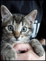 Cute kitten2 by shimauuuma