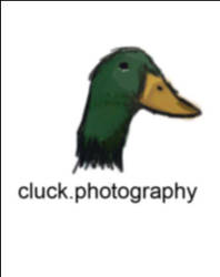 Amy Cluck Photography Logo