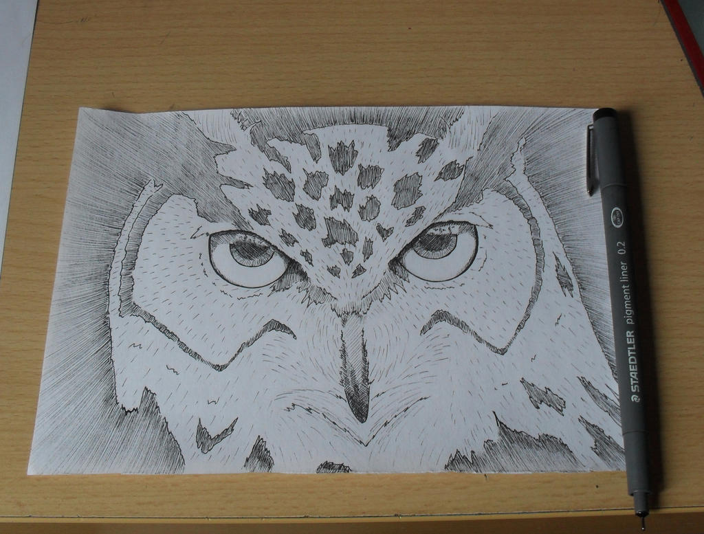 Buho(owl)  Classwork by Bozakchidori
