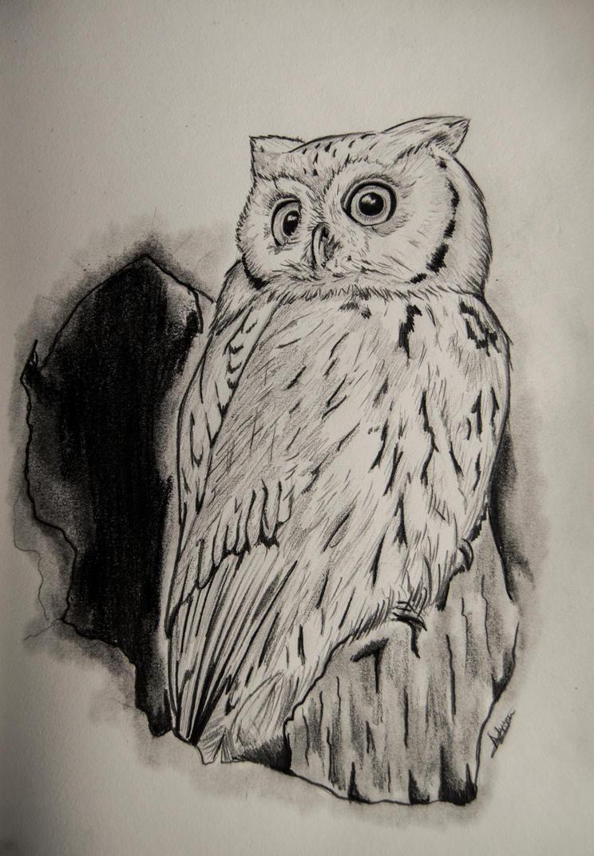 OWL by Bozakchidori