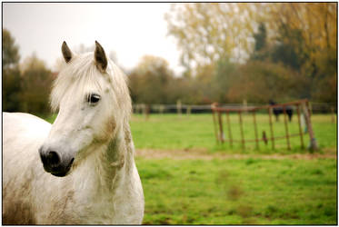 The White horse by thezulu