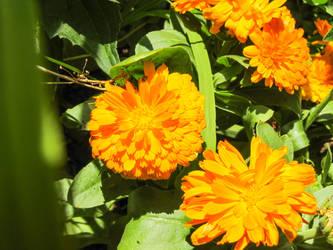 Plant 01 by Puma1904