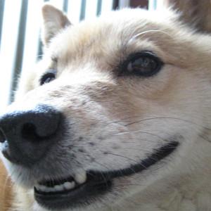 Genki-JAM's Profile Picture