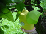Weepinbell - Hang on the tree