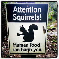 Squirrel Sign by Kitishane