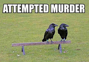 Attempted Murder by boggo2300