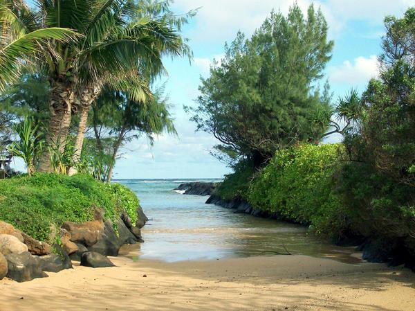 kauai estuary by 00MRSky00