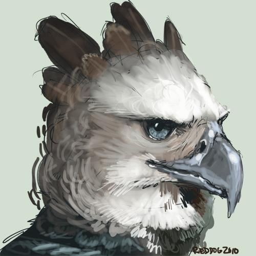 Harpy eagle for duke by wylieblais on deviantart - Harpy eagle hd wallpaper ...