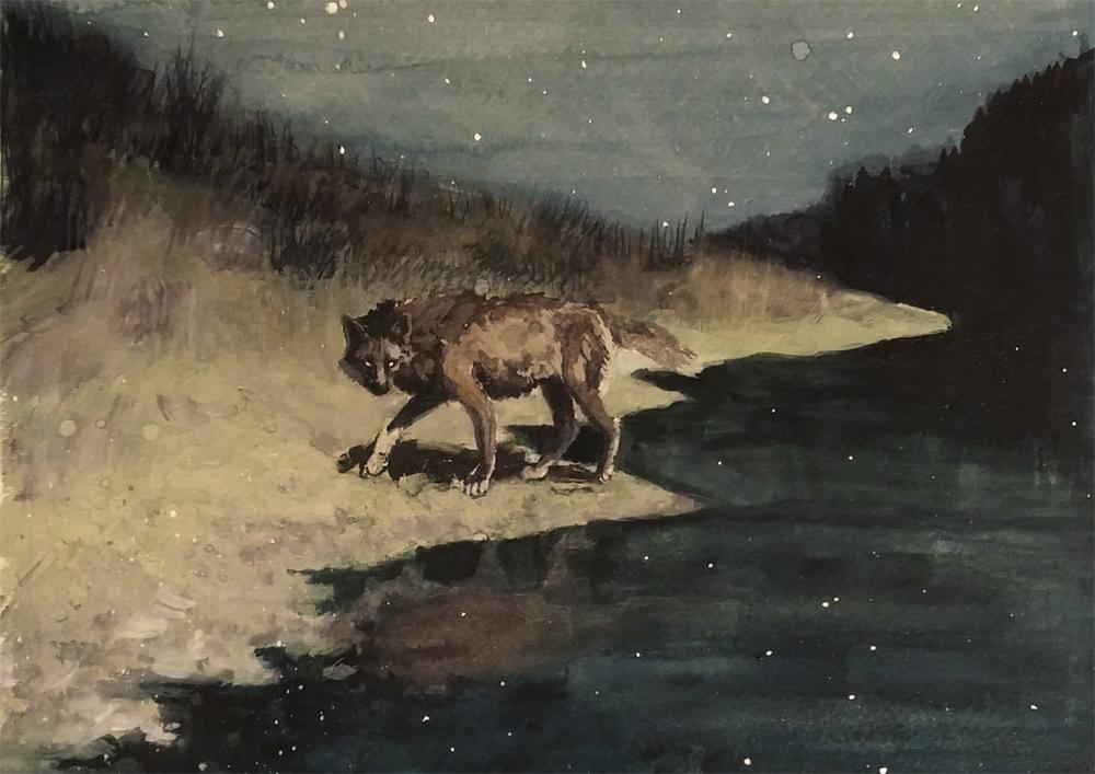 Night Wolf Study by wylieblais