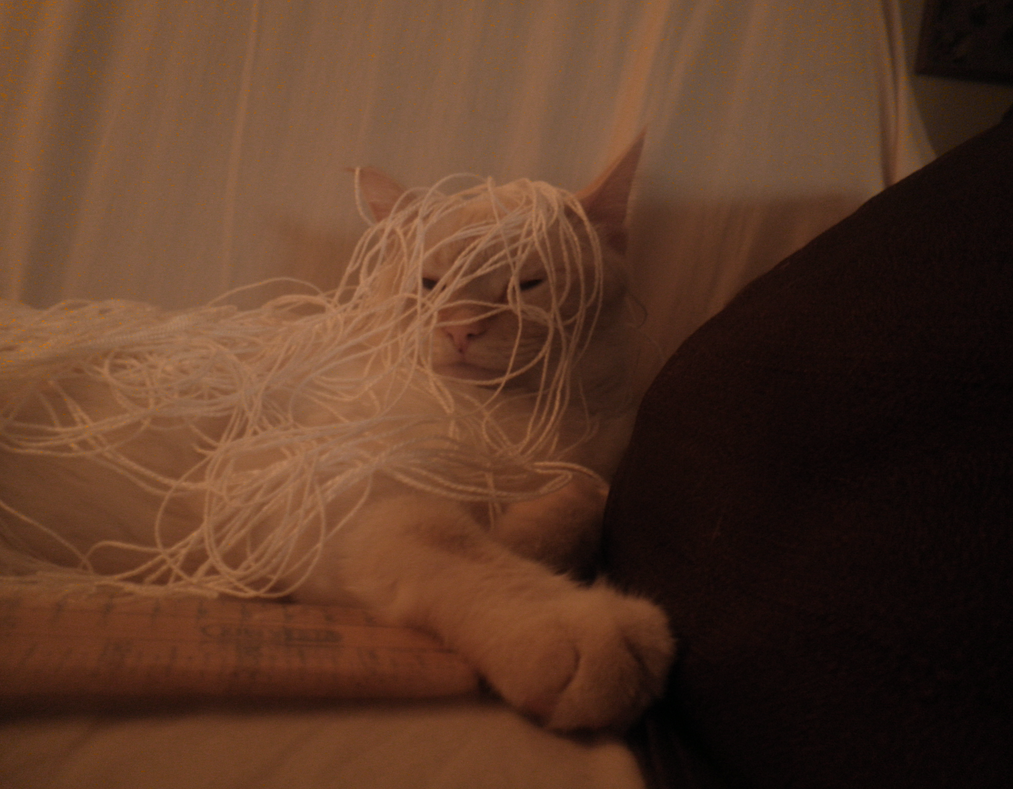You know what they say about Cats and String by Shiinsan23