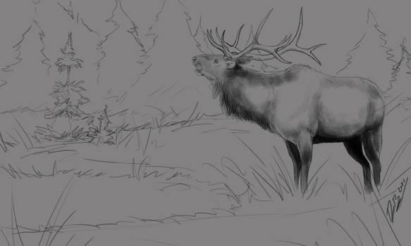 Elk Sketch