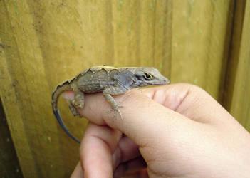 Lizard on my thumb by ceemdee