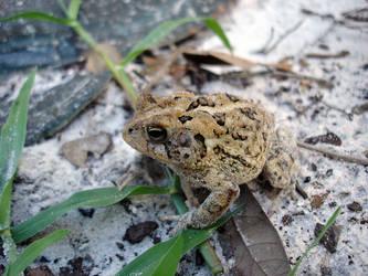 A toad by ceemdee