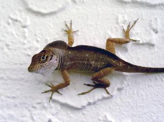 Lizard by ceemdee